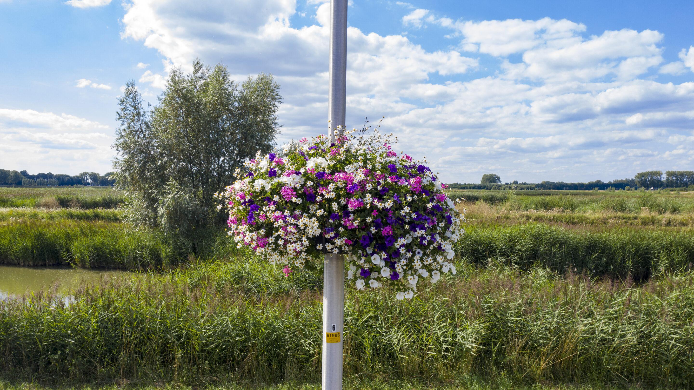 Oase Lease Hanging baskets aan lantaarnpalen groeiproces